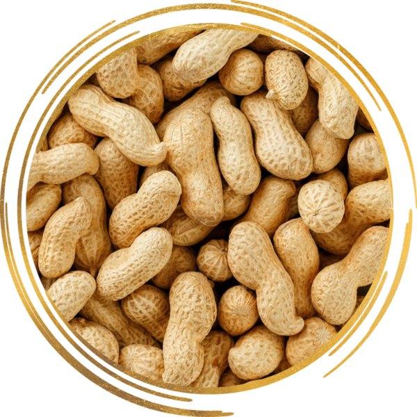 арахис в скорлупе сырой